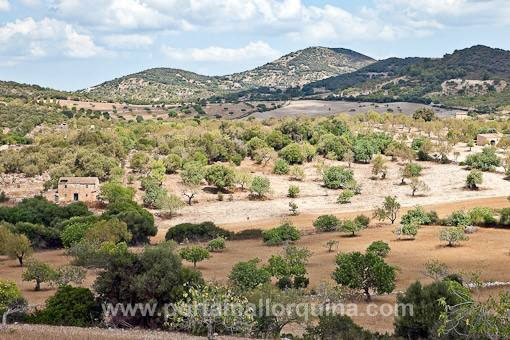 земельные участки на San Lorenzo