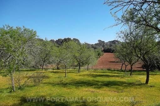 земельные участки на S'Alqueria Blanca