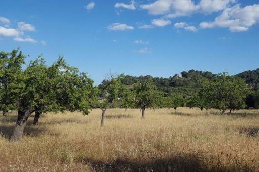 земельные участки на Selva