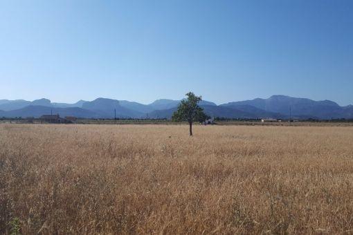 земельные участки на Binissalem