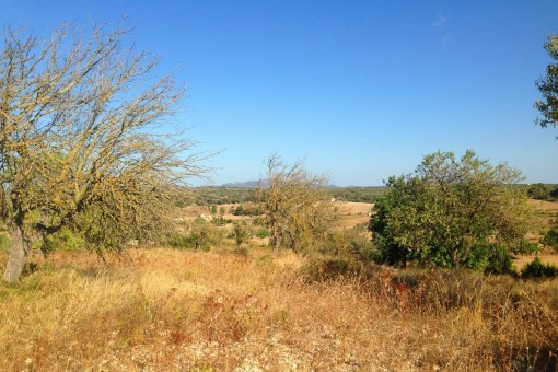 Building plot with license amidst the rolling landscape in the countryside near to Santa Margarita