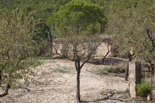 земельные участки на Capdella