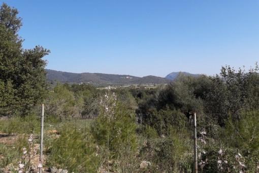 земельные участки на Campanet