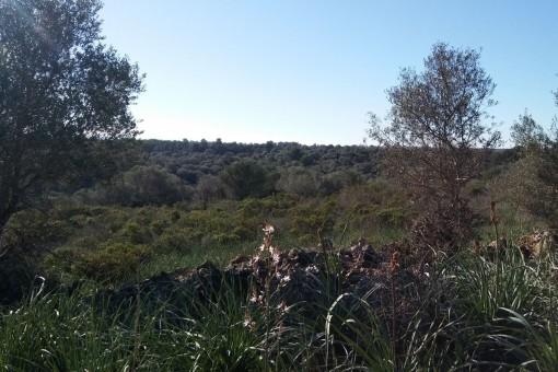 земельные участки на Cala Romantica