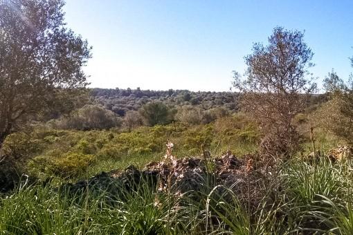 земельные участки на Cala Romantica продажа