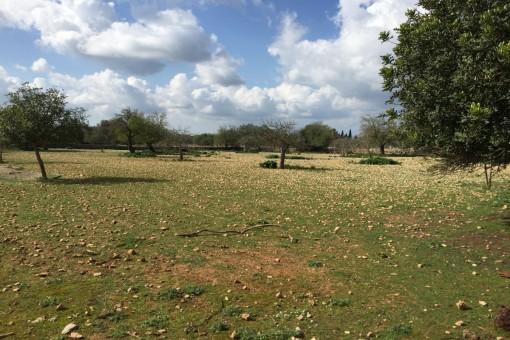 земельные участки на Lloret de Vista Alegre