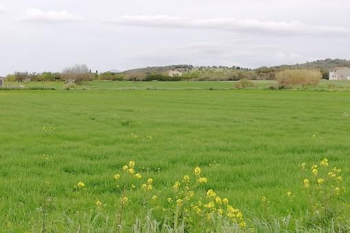 земельные участки на Sant Joan