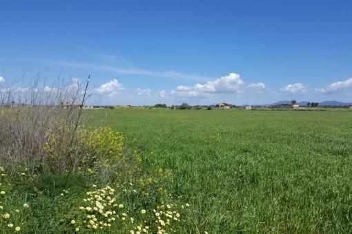 земельные участки на Sa Rapita