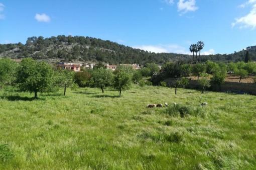 земельные участки на Calvia