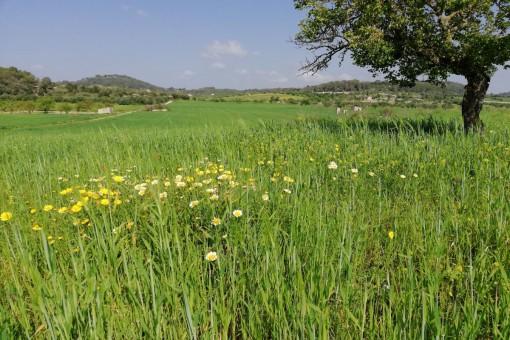 земельные участки на Montuiri