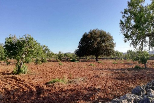 Beautiful building plot near to Llubi/Sineu with approx. 18.000 sqm and construction possibilities at a very fair price