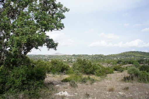 Large building plot with valid construction licence and project between Arta and Son Servera