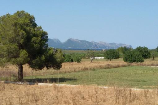 земельные участки на Alcudia