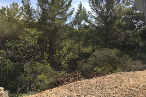 A large south oriented plot for building a family house in Cala Vinyas