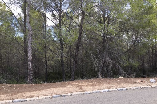 A large northwest oriented plot for building a family house in Cala Vinyas - purchase