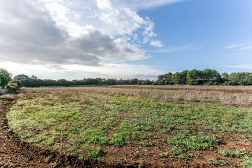 земельные участки на Sencelles продажа