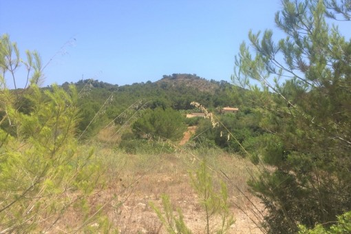 Building plot surrounded by nature in the coastal urbanisation Font de Sa Cala