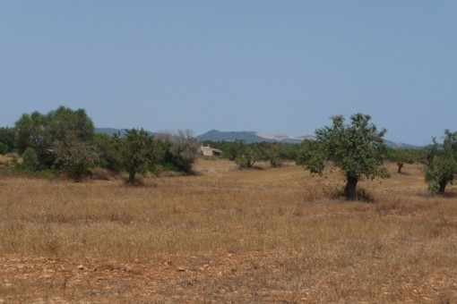 Wonderful building plot between Campos and Santanyi in Sa Sorda