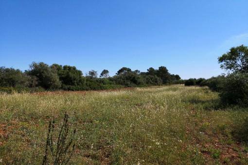 земельные участки на Pina