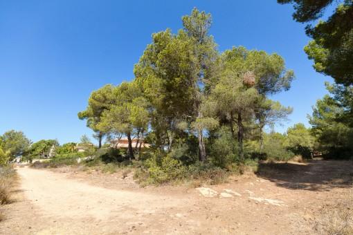 земельные участки на Mayoris Decima