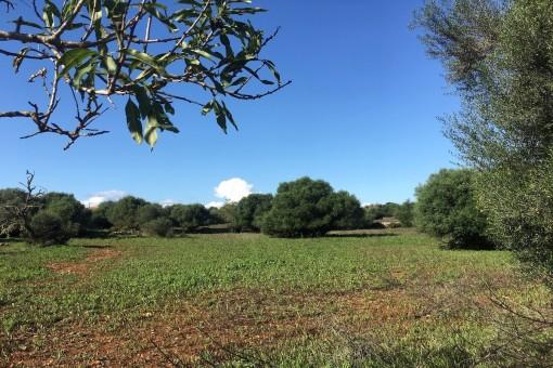 земельные участки на Santanyi