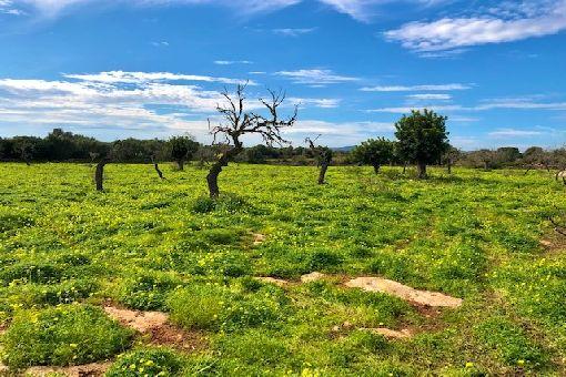 земельные участки на Sa Coma