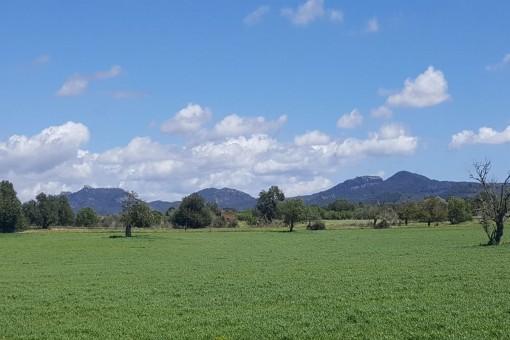 земельные участки на Cas Concos