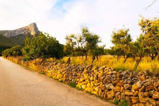 земельные участки на Colonia de San Pedro