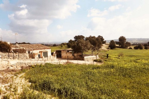земельные участки на Sineu